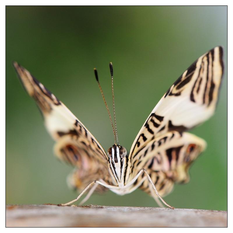 Sortie au Jardin des Papillons de Grevenmacher le 01 Avril 2012 : Les photos 2012-grevenmacher-04