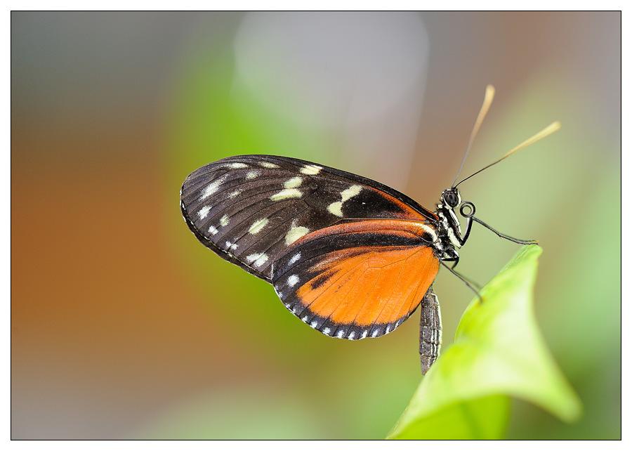 Sortie au Jardin des Papillons de Grevenmacher le 01 Avril 2012 : Les photos 2012-grevenmacher-05