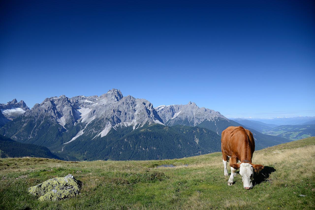 Sud-Tirol [maj. 12-09-2015] 800_5929