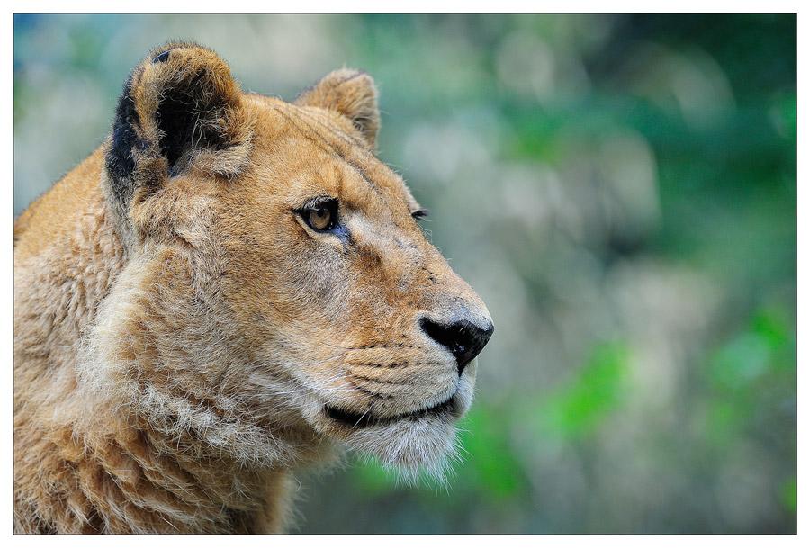 Sortie au Zoo D'amnéville le 05 Mai 2012 : Les photos D3S_3729