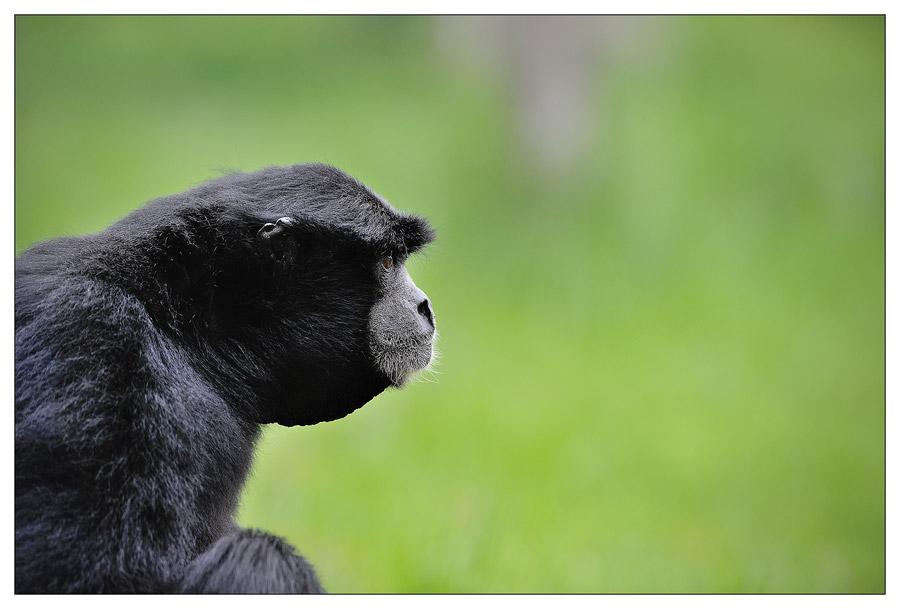 Sortie au Zoo D'amnéville le 05 Mai 2012 : Les photos D3S_3761