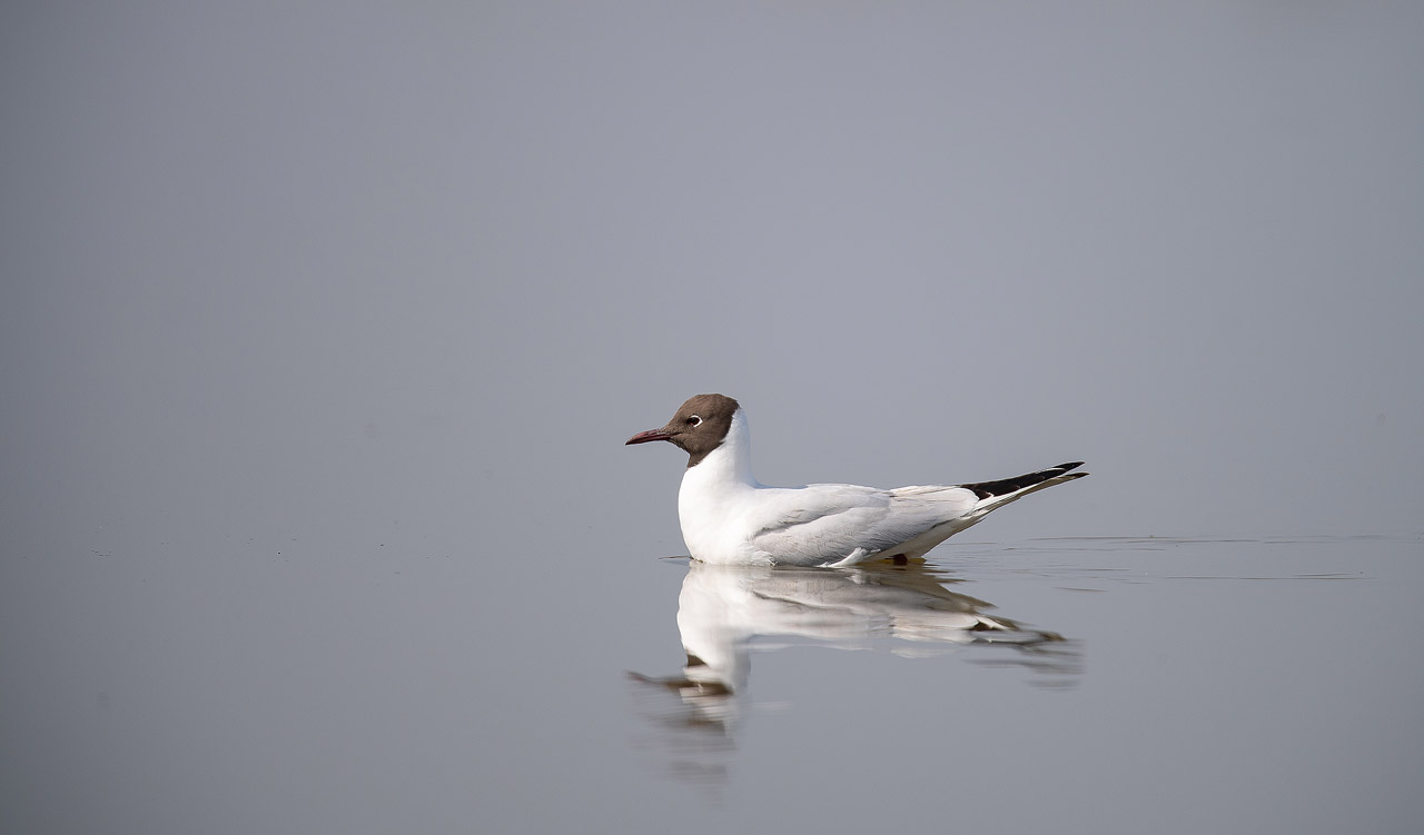 Mouette ND5_1388