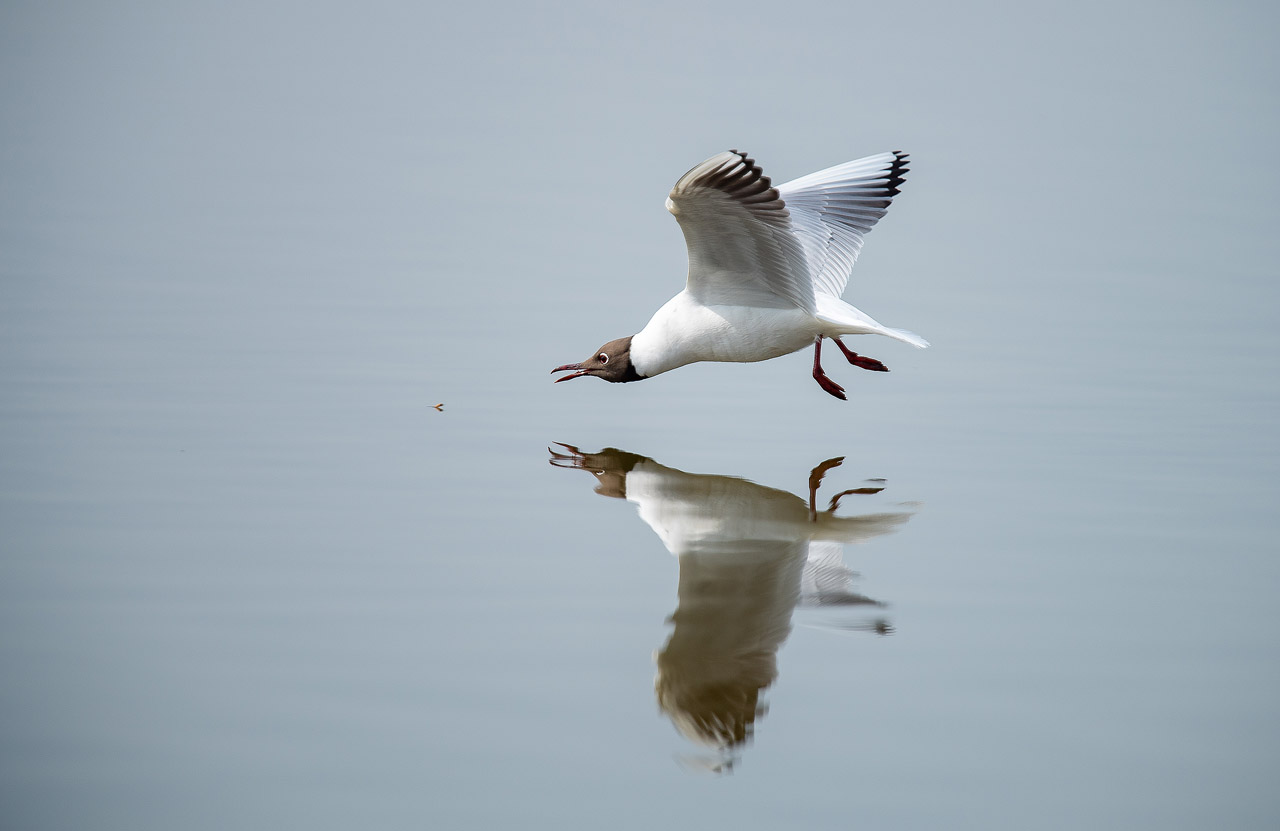 Mouette ND5_1429