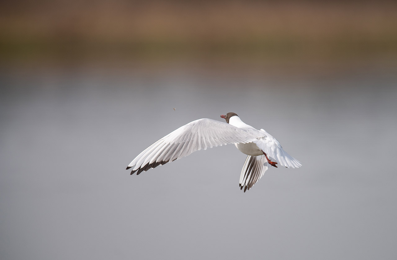 Mouette ND5_1443